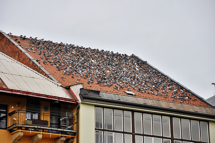 A2B Pest Control are able to install spikes to deter birds from roofs in Brentwood.