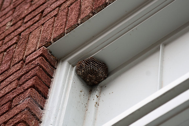 We provide a wasp nest removal service for domestic and commercial properties in Brentwood.